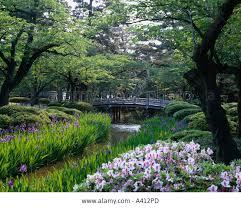 Azalea Topiary Stream Gregariousness Azalea Japanese Garden Tsukiyama Blue