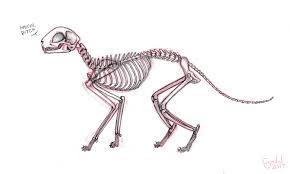 cat skeleton sketch by cyndalcreates on deviantart