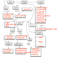 endocrine system concept map chapter 3 concept map truaxbiology com r truax