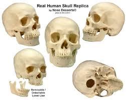 Human Anatomy Skull Bones Human Anatomy Diagram Easy To Understand Human Anatomy Skull