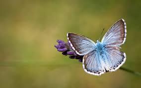 butterfly backgrounds free download pixelstalk net