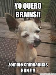 Meme Chihuahua - chihuahua