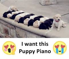 Piano Meme - dopl3r com memes i want this puppy piano