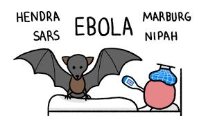 why do bats transmit so many diseases like ebola youtube