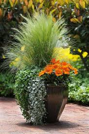 outstanding ornamental grasses for landscapes and containers