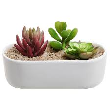 modern oval design white ceramic succulent plant