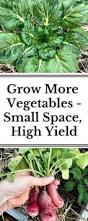 Container Gardening Peas - container garden peas u2013 growing and caring for peas in pots