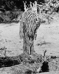 the strange creature of topanga canyon paul blaisdell his life