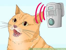 Keep Cats In Backyard 3 Ways To Stop Cats From Using Your Yard As A Litterbox Wikihow