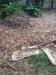 turn your lawn into an instant garden with sheet mulching