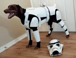 Star Wars Dog Halloween Costumes 35 Cool Pet Costumes Dogs Sizes Awesome Stuff 365