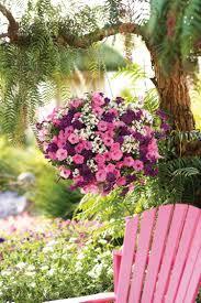 fleurs vivaces rustiques plantes retombantes à fleurs et vivaces pour un extérieur fleuri