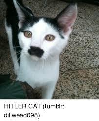 Cat Memes Tumblr - 25 best memes about cat tumblr cat tumblr memes