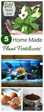 home made miracle grow make your own homemade plant fertilizer