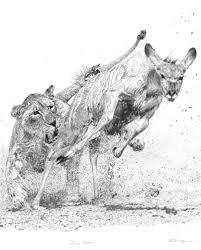 dynamic realism original pencil drawing of fierce pursuit