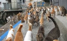 cat island caretaker of japan s cat island is overwhelmed with donations