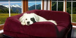 Window Seats For Dogs - fabulous furniture for your furry friends the savvy pet