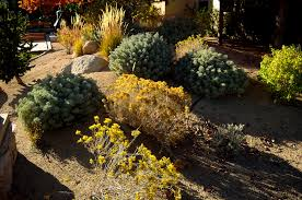 what is xeriscaping water efficient landscaping for leed green