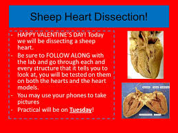 Sheep Heart Anatomy Quiz Do Now Read The Article About Heart Attacks And Various Heart