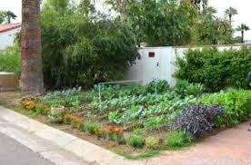 small vegetable garden ideas nz best garden reference