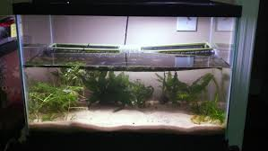 submersible led aquarium lights fire belly newts dirty tank journal page 2 tropical fish keeping