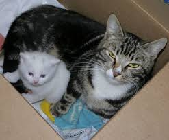 a stray tabby cat gave birth to only one kitten