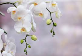 white orchids just add orchids beauty and simplicity a fresh take