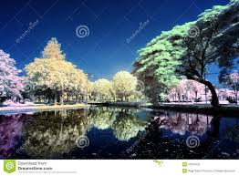 colorful trees at lake royalty free stock images image 32333429