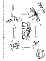free dragonfly life cycle coloring page