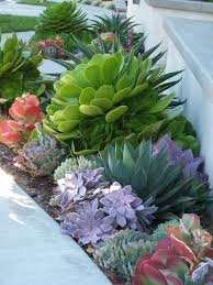 succulent landscaping grassless front yard low maintenance find