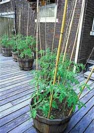 Cucumber Spacing On Trellis Trellising Fruits And Vegetables Saves Garden Space Hobby Farms