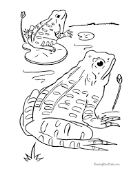 Images Frog Cute Coloring Frog Colouring Page