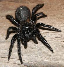 17 Best Images About Spider - 17 best images about spiders on pinterest coins alan lee and