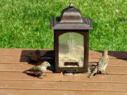 birding is fun birds in control