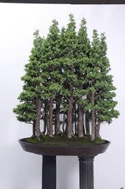 best 25 bonsai forest ideas on pinterest bonsai japanese maple