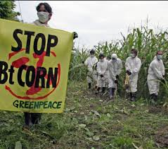 philippine u0027s gmo media coverage has moved from fear to science