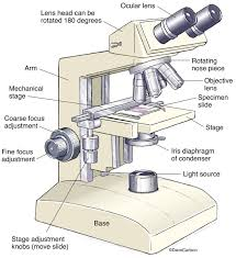 why is a light microscope called a compound microscope compound light microscope drawing at getdrawings com free for