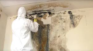 how to get rid of mold protect yourself from this fungus control