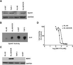 the apoptotic mechanism of action of the sphingosine kinase 1