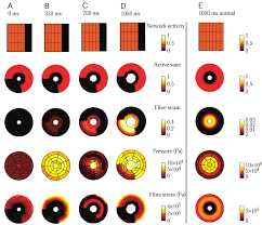 modelling the biomechanics and control of sphincters journal of