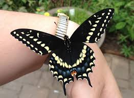 the butterfly house internship delaware valley