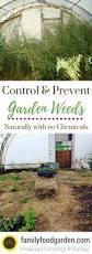 best 25 garden weeds ideas on pinterest garden ideas to stop