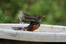 Backyard Bird Store Keep Your Bird Bath Clean And Safe This Summer The Gilligallou