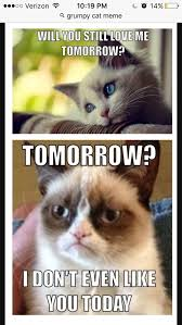 Sad Cat Memes - this is so sad but yet so funny funny pinterest grumpy cat