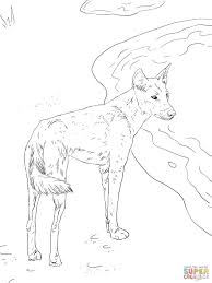 download dingo for coloring page animal pictures of dingo