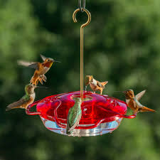 happy hummingbirds tips for choosing the perfect hummingbird