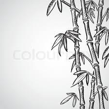 bamboo sketch stock vector colourbox