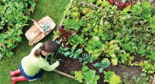Home Gardening Ideas Gardening And Landscaping In Bangalore Grow And Glow Gardens