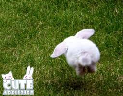 hopping bunny lop eared rabbits images hopping bunny wallpaper and background