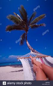 hammock and palm tree summer vacation holiday relax paradise